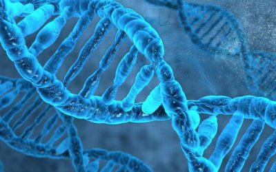 What's In Your Genes? Could it be MTHFR?