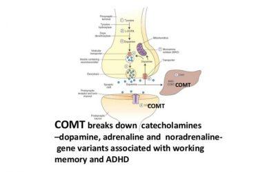 Understanding COMT