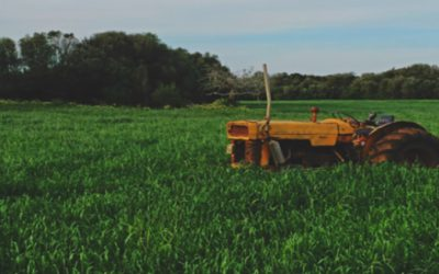 Is Buying Organic Really Worth It?