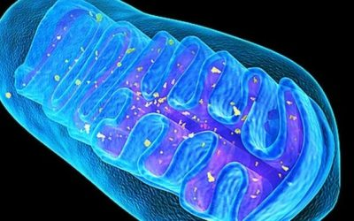 Mitochondrial Health and Cellular Energy
