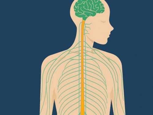 What Is the Vagus Nerve and Why Is It So Important to Our Health and Well-being?